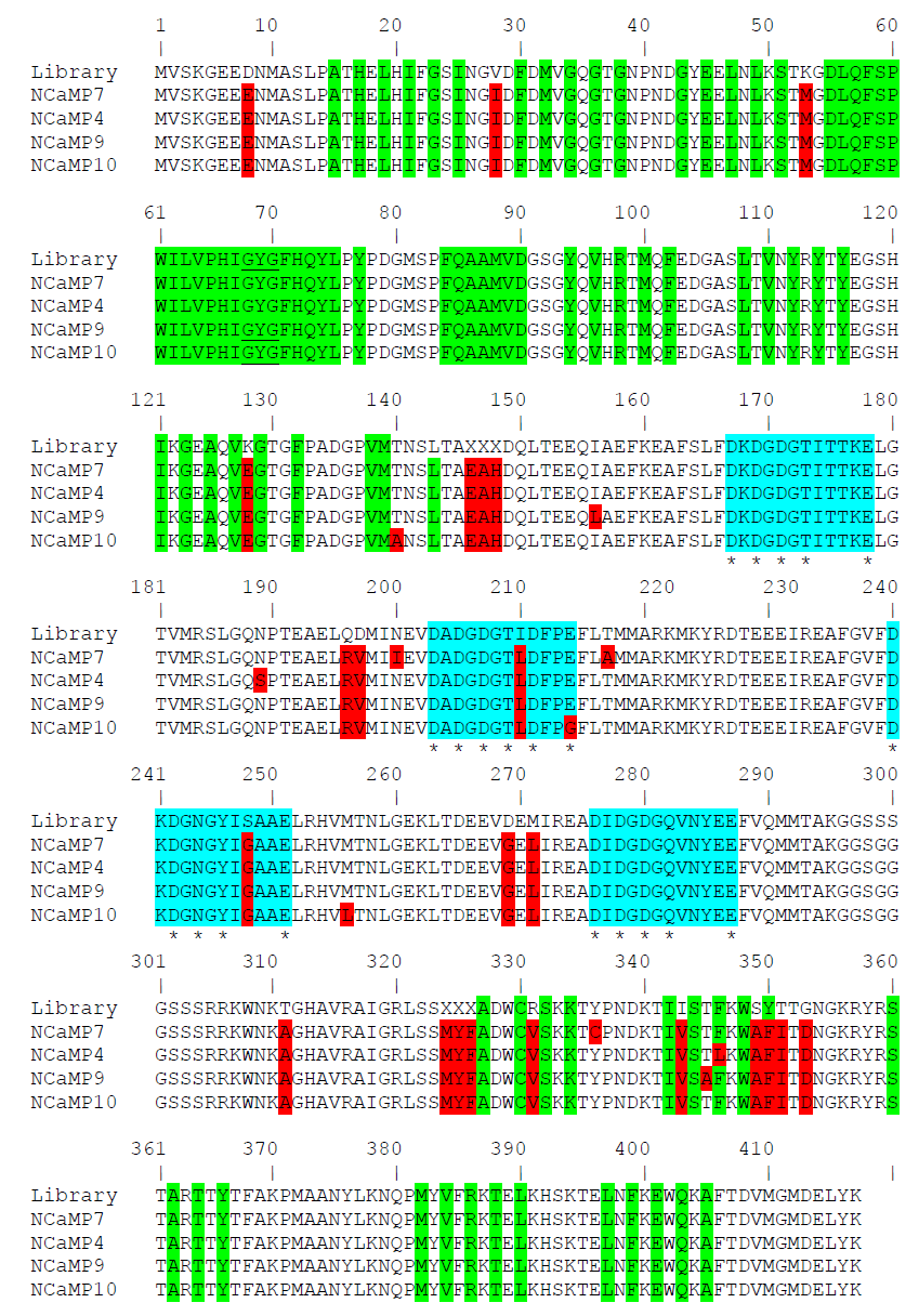 Figure S1. Alignment of the amino acid sequences for the original library and NCaMP calcium indicators. Alignment numbering follows that of NCaMPs. Residues from fluorescent part buried in β-can are highlighted with green. Residues that are forming chromophore are underlined. Mutations in NCaMPs related to the original library including linkers between fluorescent and calcium-binding parts are highlighted in red. Residues that are forming Ca2+-binding loops are highlighted in cyan. Calcium-coordinating residues are selected with asterisks.