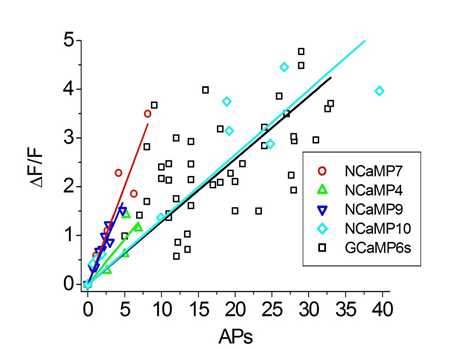 Figure S16. Comparison of responses of green NCaMPs and GCaMP6s indicators normalized to the response of the control red R-GECO1 GECI to external field stimulation of neurons co-expressing the GECIs in dissociated neuronal culture. The numeric values of the slopes calculated from the dependences of F/F over a number of APs are listed in ESI Table S5.