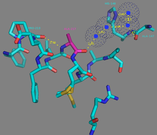 Figure S11. A217 residue surrounding and H-bonds network to the A147 and H148 residues from linker between fluorescent and calcium-binding domains according to NCaMP7 X-ray structure (PDB ID - 6XW2). H-bonds network is shown as dash lines between A217 (in magenta), water molecules (in blue dots), P213, A147 and H148.