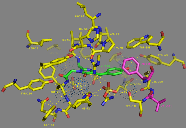 Figure S5. 6.0Å chromophore environment according to NCaMP7 X-ray structure (PDB ID - 6XW2). Chromophore, 6.0Å-surrounding residues, water molecules as dots and V331, F346 residues are shown in green, yellow, blue and magenta colors, respectively. H-bonds are shown as dash lines.