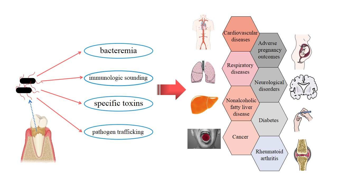 Figure 1. Strategies by which Porphyromonas gingivalis can invade the whole body, along with simple a schematic representation of Porphyromonas gingivalis-associated systemic diseases.