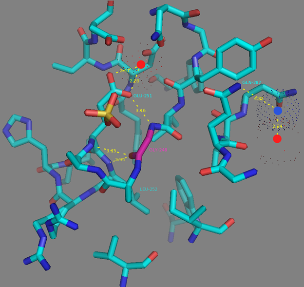 Figure S7. G248 residue surrounding according to NCaMP7 X-ray structure (PDB ID - 6XW2). H-bonds are shown as dash lines between G248 (in magenta) and E251, E251 and calcium ion from EF3 (as red dots), G248 and L252, Q282 and water molecule (as blue dots), water molecule and calcium ion from EF4 (as red dots).