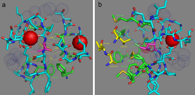 Figure S6. L210 residue hydrogen (a) and hydrophobic (b) contacts according to NCaMP7 X-ray structure (PDB ID - 6XW2). (a) Two H-bonds between L210 (in magenta) and I174 residues are shown as dash lines. (b) Side group of L210 residue (in magenta) is exposed to the hydrophobic pocket which is formed by residues from M13-peptide (A317, I318, and L321, in yellow) and CaM (EF1 and EF2 hands and adjacent to them amino acids) (F163, F166, I174, L179, I199, L210, F215, M218, and M219, in green).  Calcium ions and water molecules are shown as red spheres and blue dots, respectively.