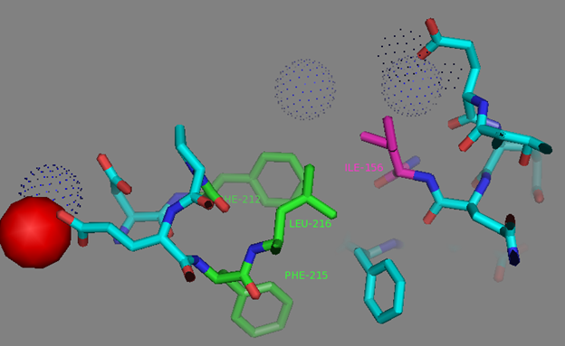 Figure S12. I156 residue surrounding and network to the residues in EF2 coordinating calcium ion according to NCaMP7 X-ray structure (PDB ID - 6XW2). Calcium ion from EF2 is shown as red sphere. Side group of I156 residue (in magenta) is exposed to the hydrophobic pocket which is formed by residues from EF2 (F212, in green) and adjacent to EF2 amino acids (F215 and L216, in green). Water molecules are shown in blue dots.