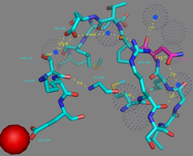 Figure S9. N189 residue surrounding and H-bonds network to the T176 residue from EF1 calcium coordinating center according to NCaMP7 X-ray structure (PDB ID - 6XW2). H-bonds network is shown as dash lines between N189 (in magenta), R184, water molecules (in blue dots), E192, G180 and T176. Calcium ion from EF1 is shown as red sphere.