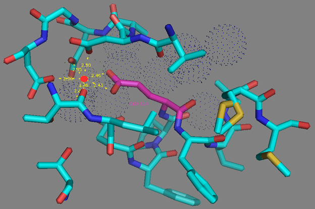 Figure S13. E214 residue surrounding and calcium coordination sphere in EF2 hand according to NCaMP7 X-ray structure (PDB ID - 6XW2). Side group of E214 residue (in magenta) forms two H-bonds with calcium ion (as red dots) from EF2. Water molecules are shown as blue dots.