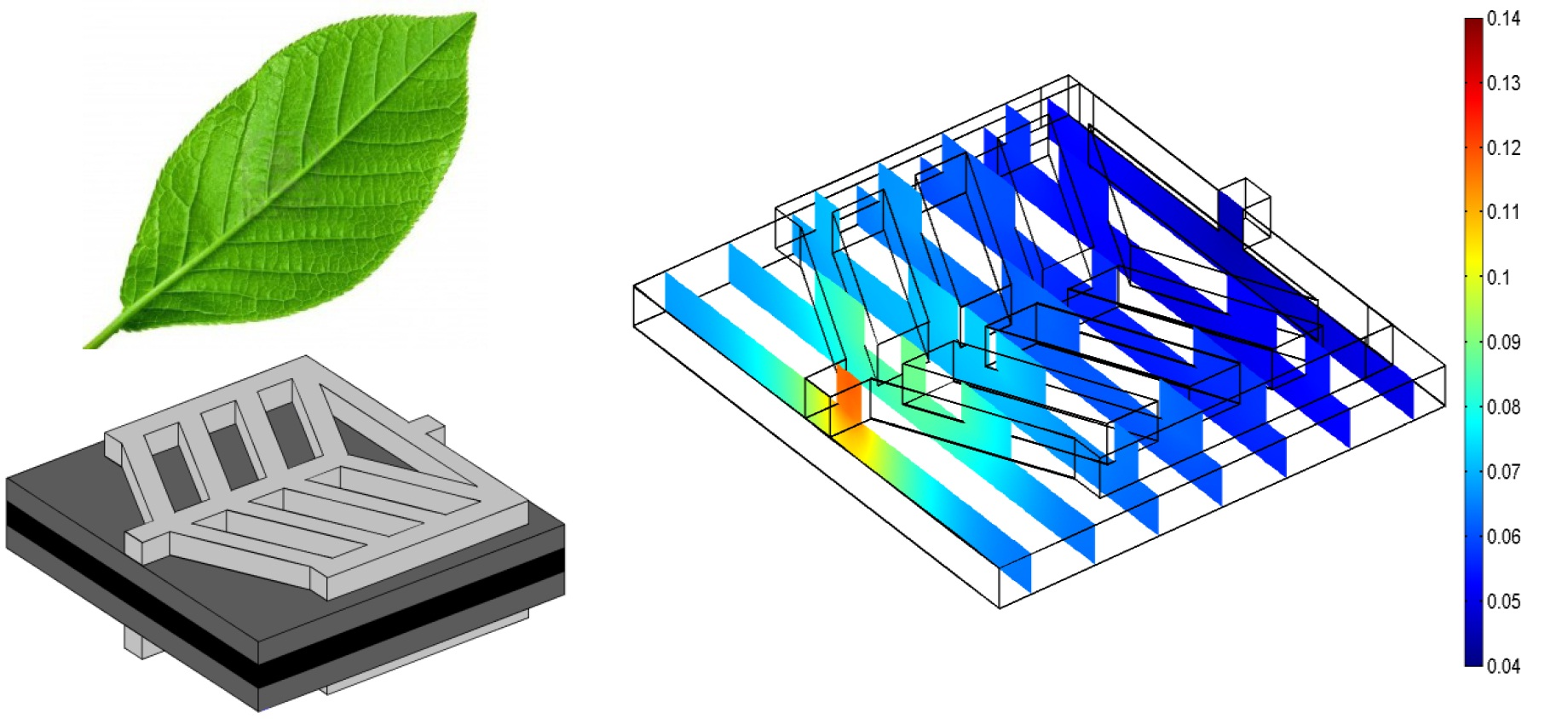 Figure 5. Three-dimensional computational domain and oxygen weight fraction distribution in micro PEM fuel cell with nature inspired gas flow channels. The design inspired from the existed biological fluid flow patterns in the leaf [12].