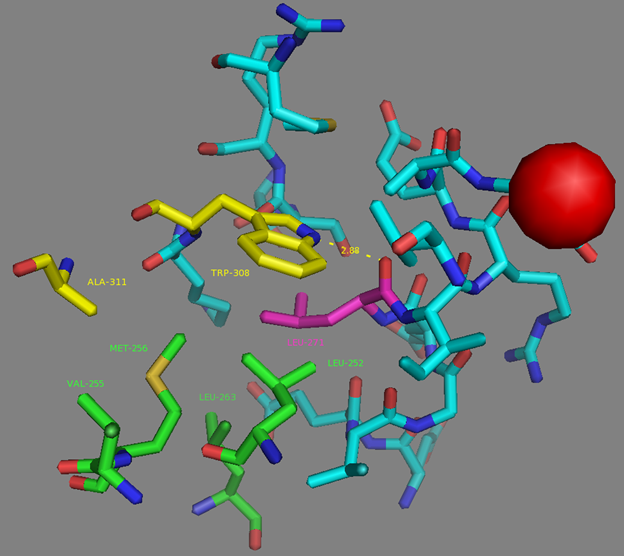 Figure S8. L271 residue surrounding according to NCaMP7 X-ray structure (PDB ID - 6XW2). H-bond is shown as dash lines between L271 (in magenta) and W308. E251 Calcium ion from EF4 is shown as red sphere. Side group of L271 residue (in magenta) is exposed to the hydrophobic pocket which is formed by residues from M13-peptide (A311 and W30, in yellow) and CaM (L252, V255, M256, L263 and L271, in green).