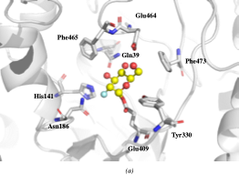 Overview of the active site of Sinapis alba Myrosinase showing interactions between residues and the 2-deoxy-2-fluoroglucosinolate (2FG) as substrate (Protein Data Bank accession number 1E70, resolution: 1.65 Å)